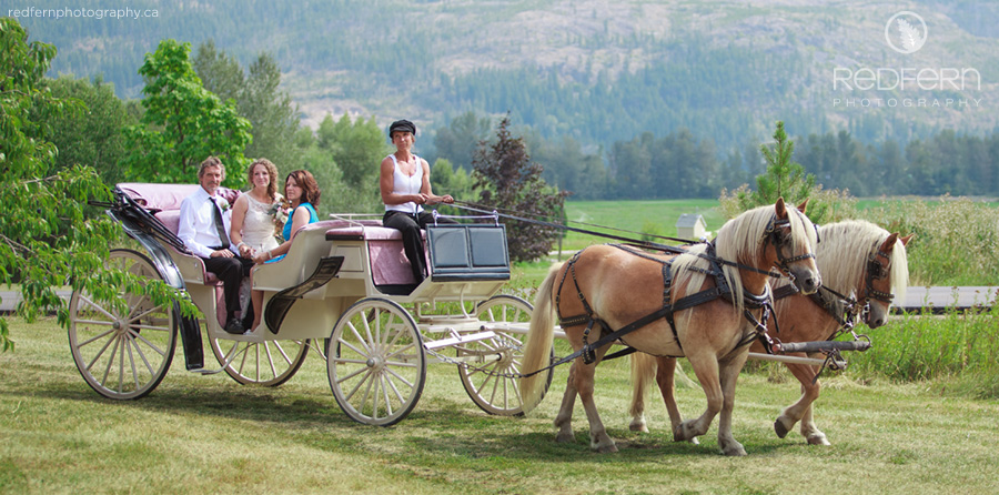 salmon arm wedding horse carriage bride