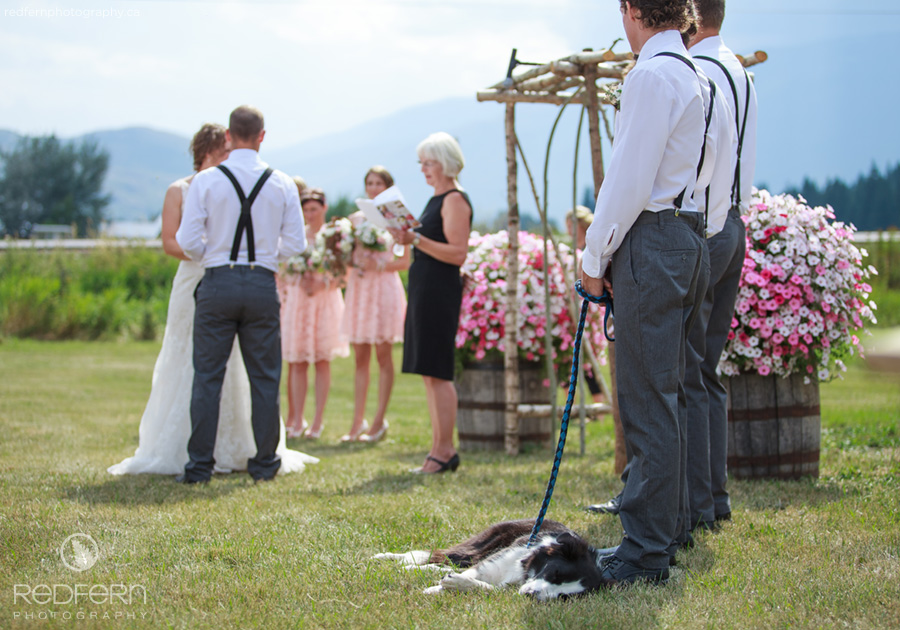 outdoor wedding ceremony border collie dog