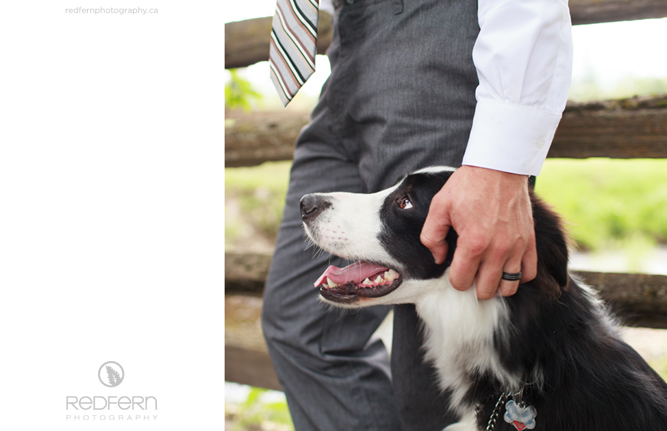 wedding border collie groom picture