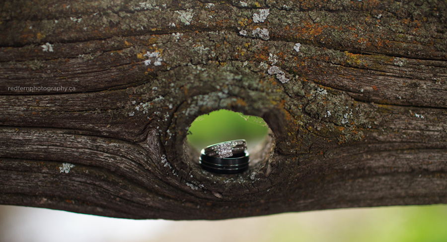 wedding rings wood knot lichen
