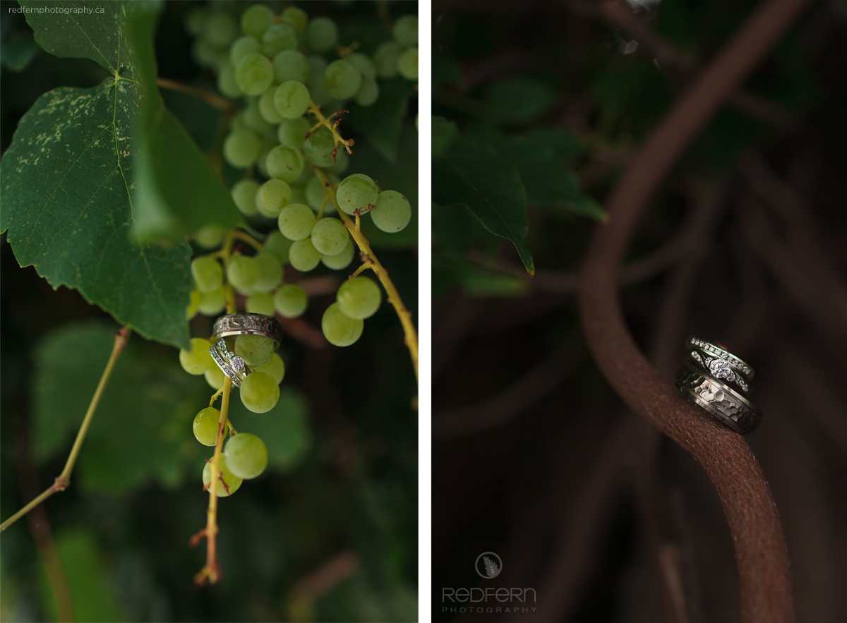 10_wedding_rings_in_grape_vines_kaleden_okanagan_photos